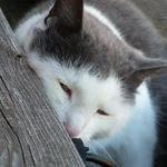 cat-content-icon