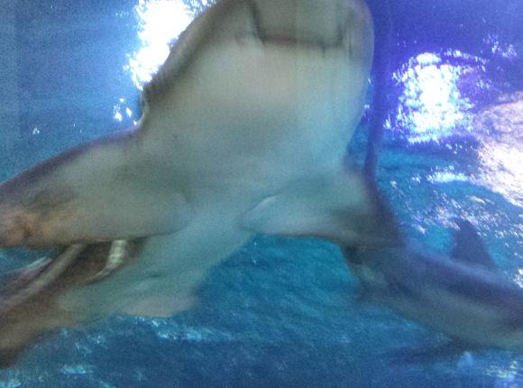 In Aquarien ist es meist recht dunkel und die Bilder verschwimmen. Deswegen wollen der Fotoapparat und das Smartphone einen Blitz einschalten. Aber das bringt noch schlechtere Ergebnisse hervor!