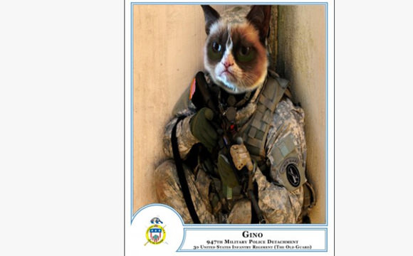 grumpy-cat-us-army