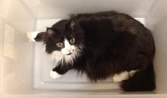 cat-bath-contraption