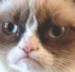 """""""Die volle Klaviatur kommerzieller Ausschlachtung"""": Mit der Grumpy Cat zum Multimillionär"""