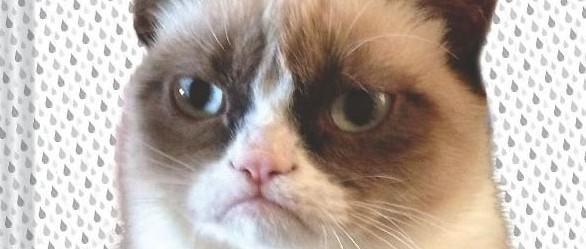 grumpy-cat-book
