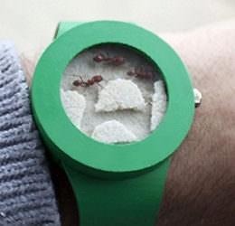 """""""Ant Watch"""": Diese Uhr beinhaltet lebendige Ameisen. Ein Skandal, oder? Nun ja…"""
