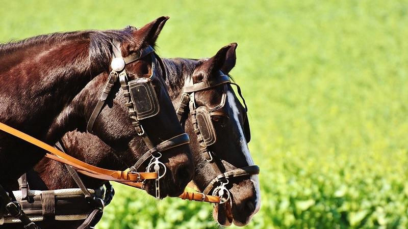 Pferd, Pferde, Fuhrwerk, Verantwortung, Unternehmen