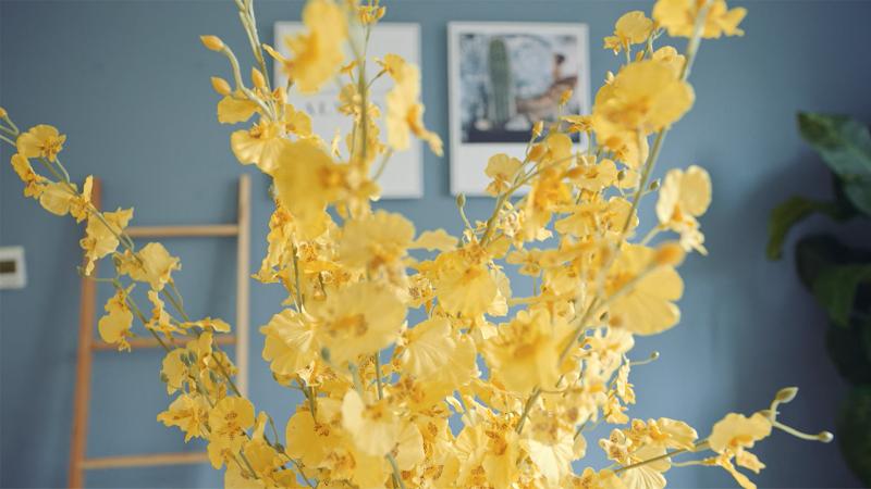 Pflanze Blume Airbnb Plus