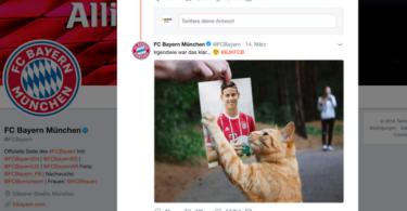 Cat-Content & Kids: Top-Teams setzen auf Viral-Klassiker