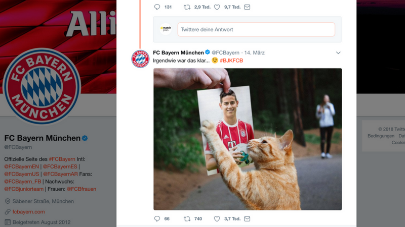 Cat-Content & Kids: Top-Teams setzen auf Viral-Klassiker