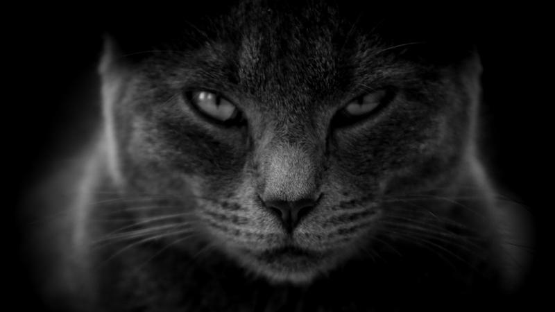 Schwarze Katze, hautnah