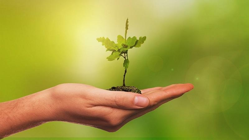 Baum Hand Nachhaltigkeit Umwelt