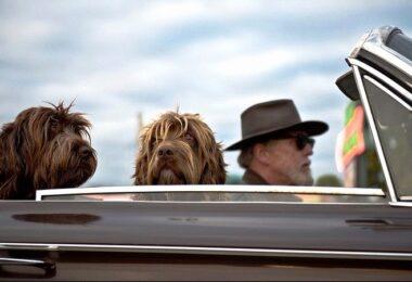 Auto Cabrio Hunde Mann mit Hut