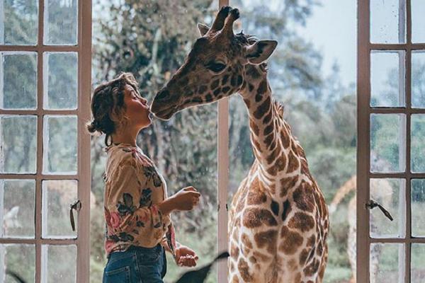 Giraffe Manor Hotel Kuss mit Giraffe