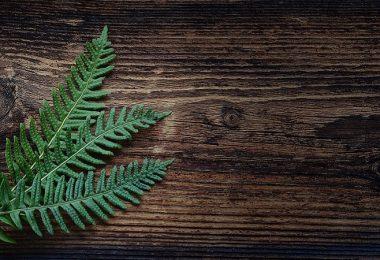 Farn, Gras, Pflanze, Holztisch, Tisch, Nachhaltigkeit, Superseven