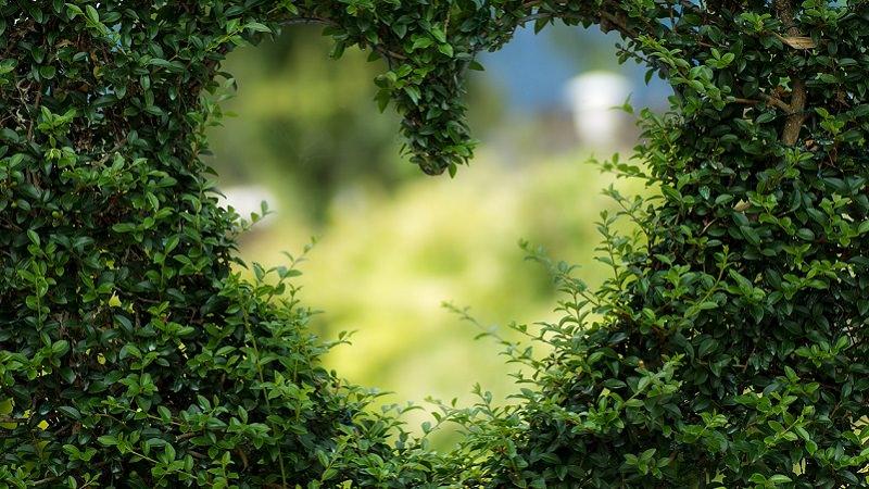 Herz, Herzen, Hecke, Liebe, Instagram