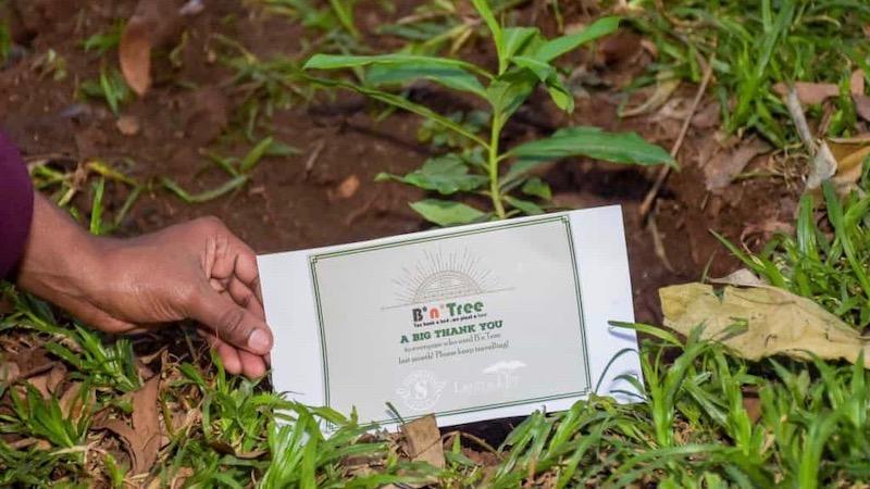 B'n'Tree, Reisen, Nachhaltigkeit, Klimaschutz