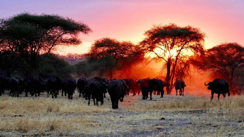 Serengti, Afrika, Savanna