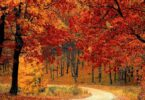 Wald, Herbst, Herbstwald, Wandern, Natur, Bäume
