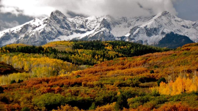 Ridgway, Colorado, Herbst, Herbstwald, Natur