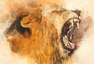 Löwe, Gebrüll, Schrei, Löwin, Führung