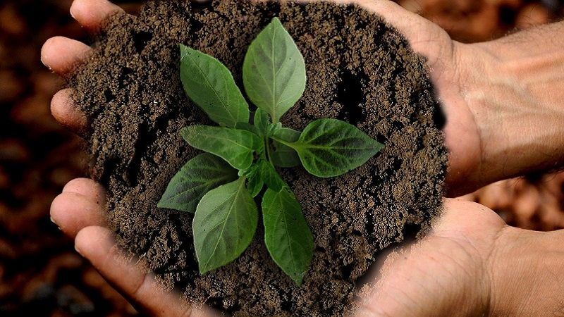 Setzling, Pflanze, Baum, Wachstum, Social Impact