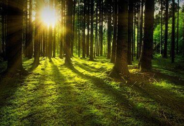 Sonne, Natur, Wald, Lichtung, Bäume, Solar Foods
