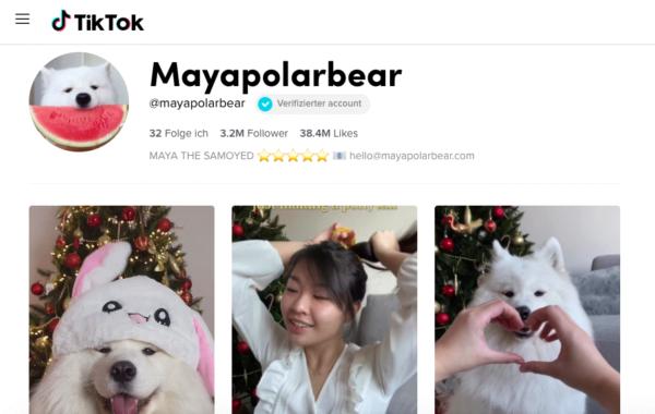 Mayapolarbear