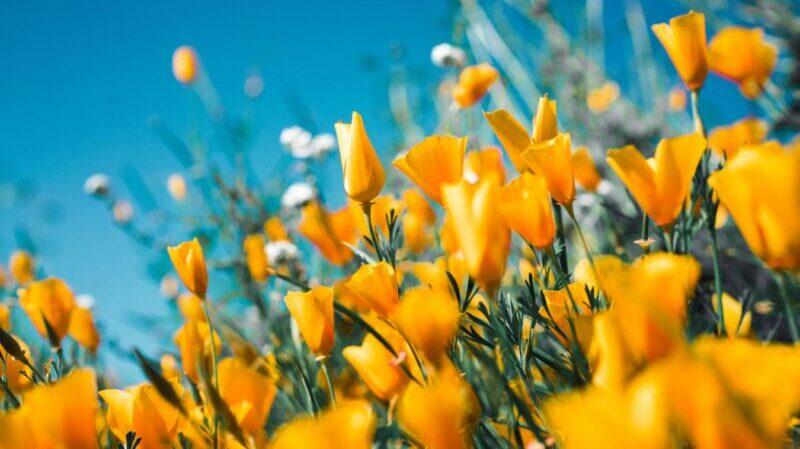 Frühling, Blumen, Wiese, Natur
