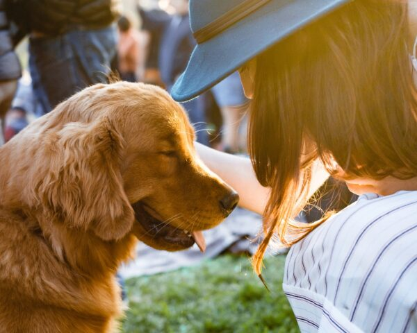 Hund, Amazon in Deutschland, SEO-Ranking