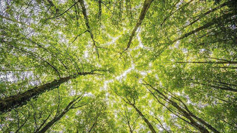 Bäume, Wald, Natur, grün