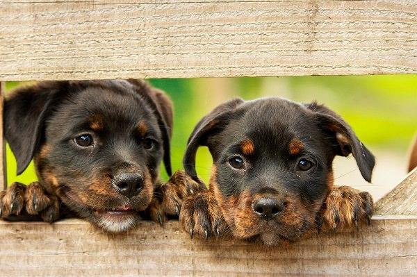 Hunde, Hund, Welpen