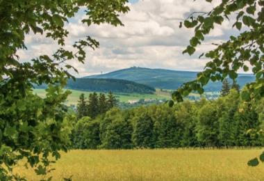Feld, Bäume, Wald, Landschaft, Panorama