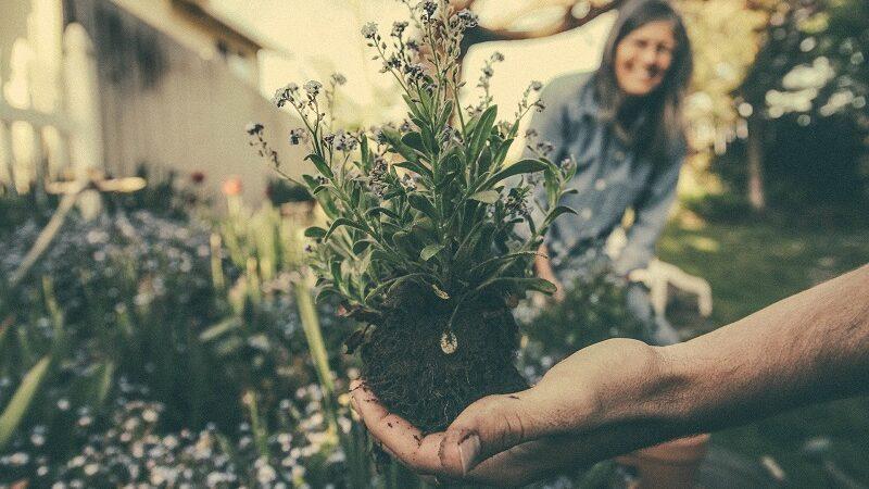 Garten, Gartenarbeit, Pflanzen, DIY, Selbstversorgung, Gärtner
