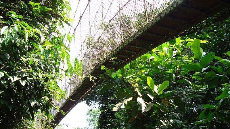 Canopy Walk, Ghana, Brücke, Urwald