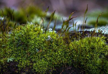 Moos, Pflanze, Natur