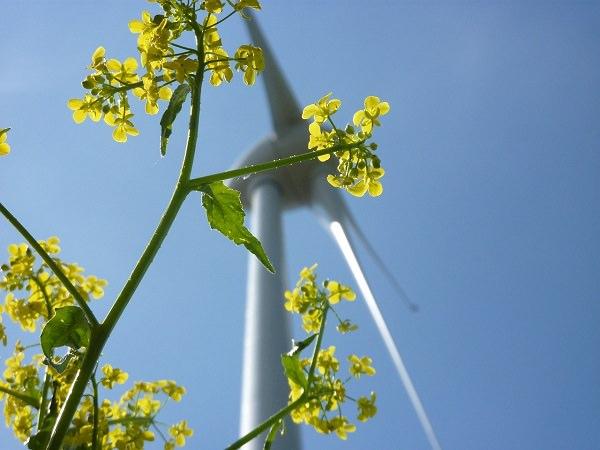 Windrad, Energie, grüne Energie, Nachhaltigkeit