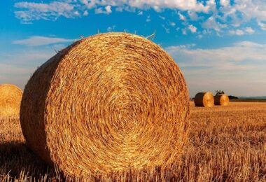 Stroh, Ballen, Feld, Landwirtschaft