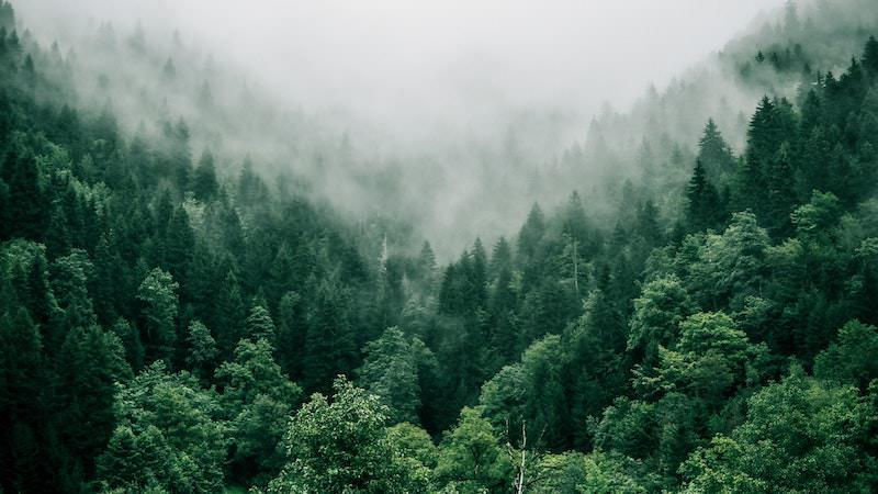 BASIC thinking klimaneutral, Wald, Natur, Klima, Klimaschutz