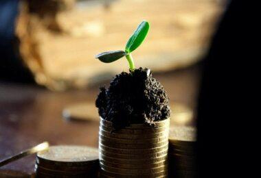 Wachstum, Geldbaum, Dividende, Dividendenrendite