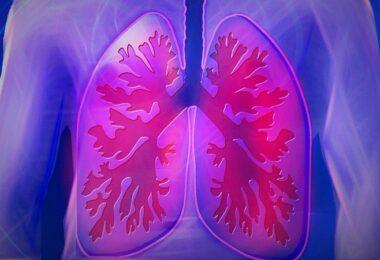 Lunge, Lungenflügel, Corona, Coronavirus, Beatmung, Ebenbuild