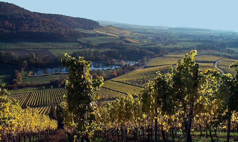 Stollburg, Weinberge, Wein, Laub, Steigerwald, Handtal