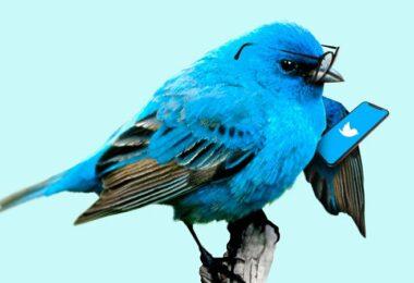 Twitter, Twitter-Vogel, blauer Vogel, Twitter-Algorithmus