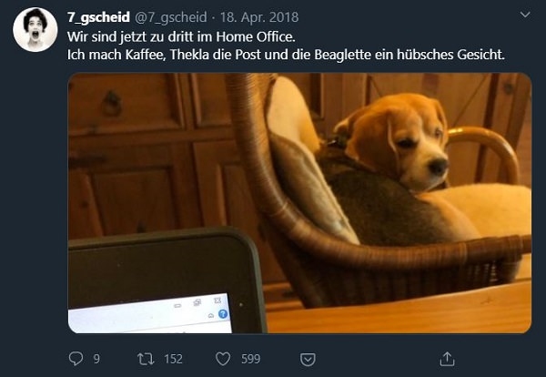 Twitter, Tweets, Home Office, Remote Work, lustige Home-Office-Tweets, lustige Home Office Tweets
