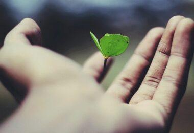 Hoffnung, Wachstum, Neuanfang, mehr Hoffnung