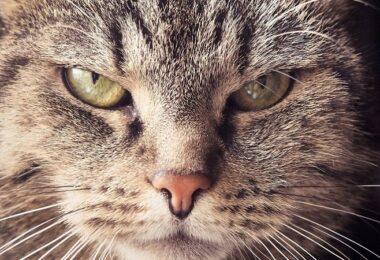Katze, Wut, wütend, genervt, nervige Bürofloskeln