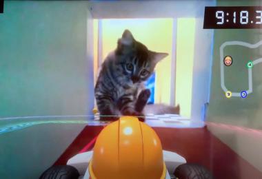 Mario Kart Live, Nintendo, Spiele, Katzen