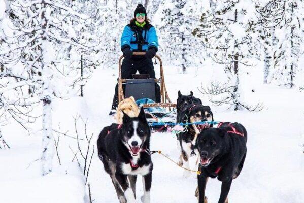 Huskeys, Schlittenfahrt, Schnee, Natur