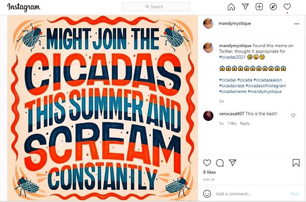 Zikaden, Memes, Instagram