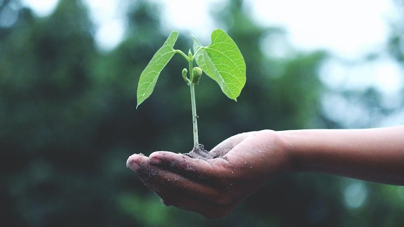 Klimaschutz-Sofortprogramm, Grüne, Klimawandel, Klimaschutz