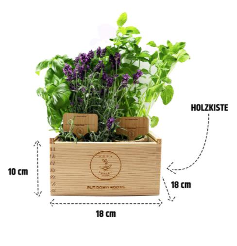 Amazon-Produkbild, Maße, Pflanzen