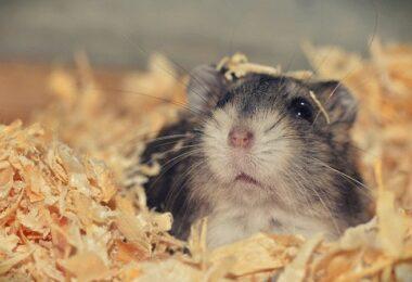 Hamster, Hamsterkäfig, Mr. Goxx, Mr Goxx, Krypto-Hamster, Crypto Hamster