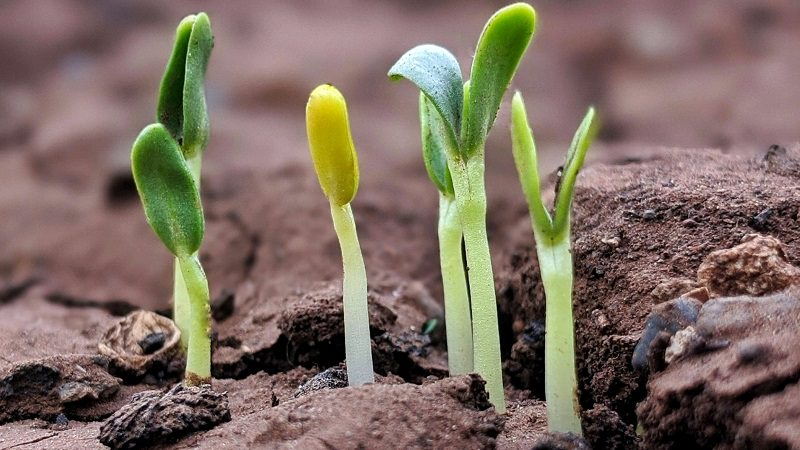 Pflanze, Wachstum, Keimlinge, exponentielles Wachstum, radikale Veränderungen